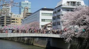 目黒川の花見時期
